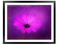 Purple Beauty, Framed Mounted Print
