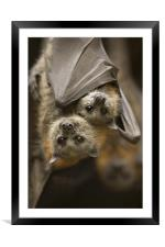Hang in There , Framed Mounted Print