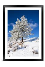 Frost Covered! , Framed Mounted Print