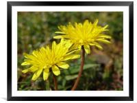 flower, Framed Mounted Print