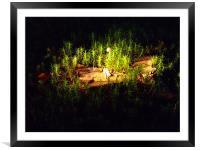 Forest Floor, Framed Mounted Print