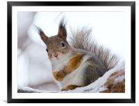 Squirrels posing, Framed Mounted Print