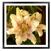 Muscadet Lily, Framed Mounted Print