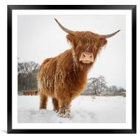 Horny cow, Framed Mounted Print