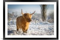 Highland Cow in the snow, Framed Mounted Print