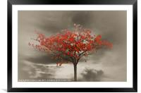 Autumn Red, Framed Mounted Print