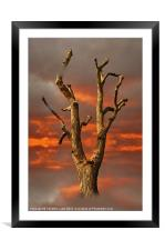 Rising From the Ashes, Framed Mounted Print