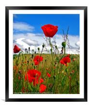 Poppy Dream., Framed Mounted Print