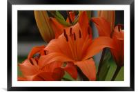 Lilies to touch, Framed Mounted Print