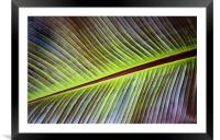 Banana Leaf, Framed Mounted Print
