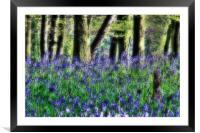 Bluebells at Ashridge, Framed Mounted Print