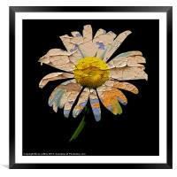 Painted Daisy, Framed Mounted Print