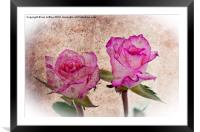 Pink Roses, Framed Mounted Print