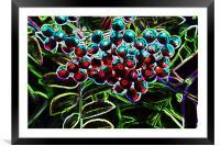 Rowan Berries, Framed Mounted Print