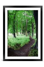 Tree Walk, Framed Mounted Print
