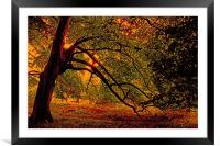 Branches, Framed Mounted Print