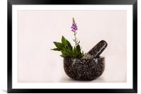 Mixed Herbs, Framed Mounted Print