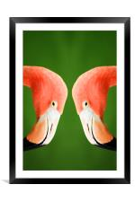 Flamingo, Framed Mounted Print