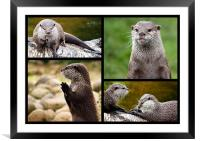 Otters, Framed Mounted Print