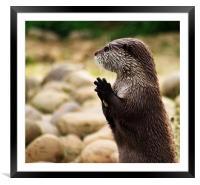 Otter, Framed Mounted Print