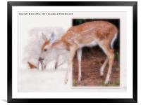 Curious, Framed Mounted Print
