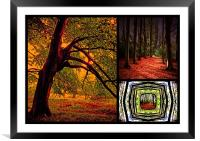 Autumn Collage, Framed Mounted Print