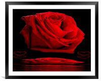 Red Rose, Framed Mounted Print