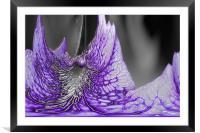 Glass Flower, Framed Mounted Print