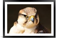 Lugger Falcon, Framed Mounted Print