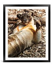 Layed Back Fossa, Framed Mounted Print