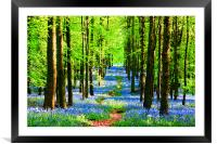 Bluebell Pathway, Framed Mounted Print