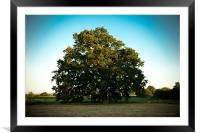 Tree, Framed Mounted Print