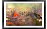 Fairy Light, Framed Mounted Print