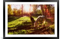 Sunlight, Framed Mounted Print