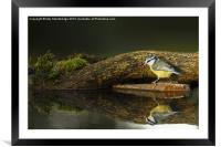 Does my bum look big in this?, Framed Mounted Print