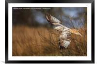 Low fly kite (light colour), Framed Mounted Print