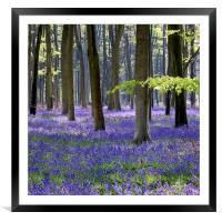 Bluebell Woodland, Framed Mounted Print