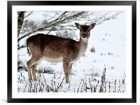 Deer in Wintertime, Framed Mounted Print