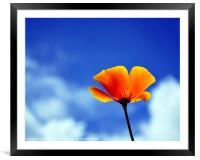 Poppy California Dreaming, Framed Mounted Print