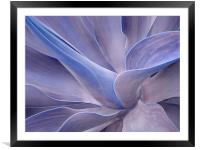 Agave in Shades of Lilac, Framed Mounted Print