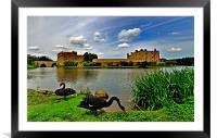 Black Swans at Leeds Castle II, Framed Mounted Print