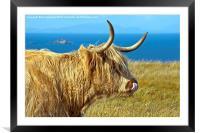 Highland Beauty Highland Cow, Framed Mounted Print