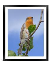 Robin in Eden, Framed Mounted Print