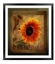 Sunflower Framed, Framed Mounted Print