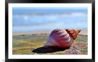 Seaside Sea shell, Framed Mounted Print