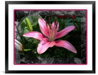 Lily , Framed Mounted Print