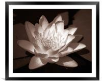Pond Lily Tritone, Framed Mounted Print