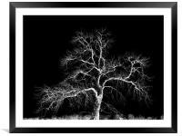 winter tree, Framed Mounted Print