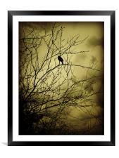 morning bird, Framed Mounted Print