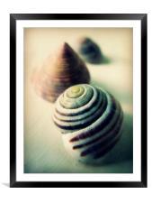 vintage seashells, Framed Mounted Print
